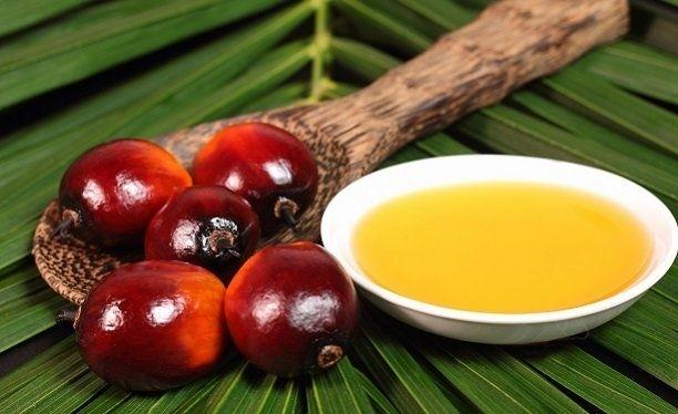 palm-yagi-gidahatti