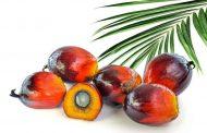 Sürdürülebilir Palm Yağı Oluşumu (RSPO) nasıl bir yıl geçirdi?