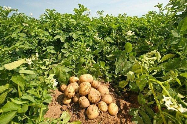 Tarımda üretici fiyatları 2017'ye hızlı başladı!