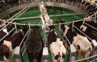 Süt üreticisine müjdeli haber! Çiğ süt fiyatı arttı