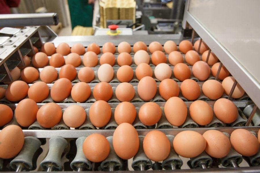 yumurta-uretim-tesisi-gidahatti (1)