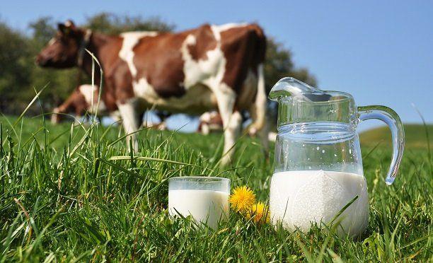 FAO, dünya sütçülüğünün fotoğrafını çekti!