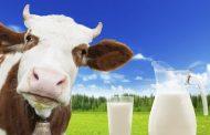 Süt üretimi 21 milyona dayandı!
